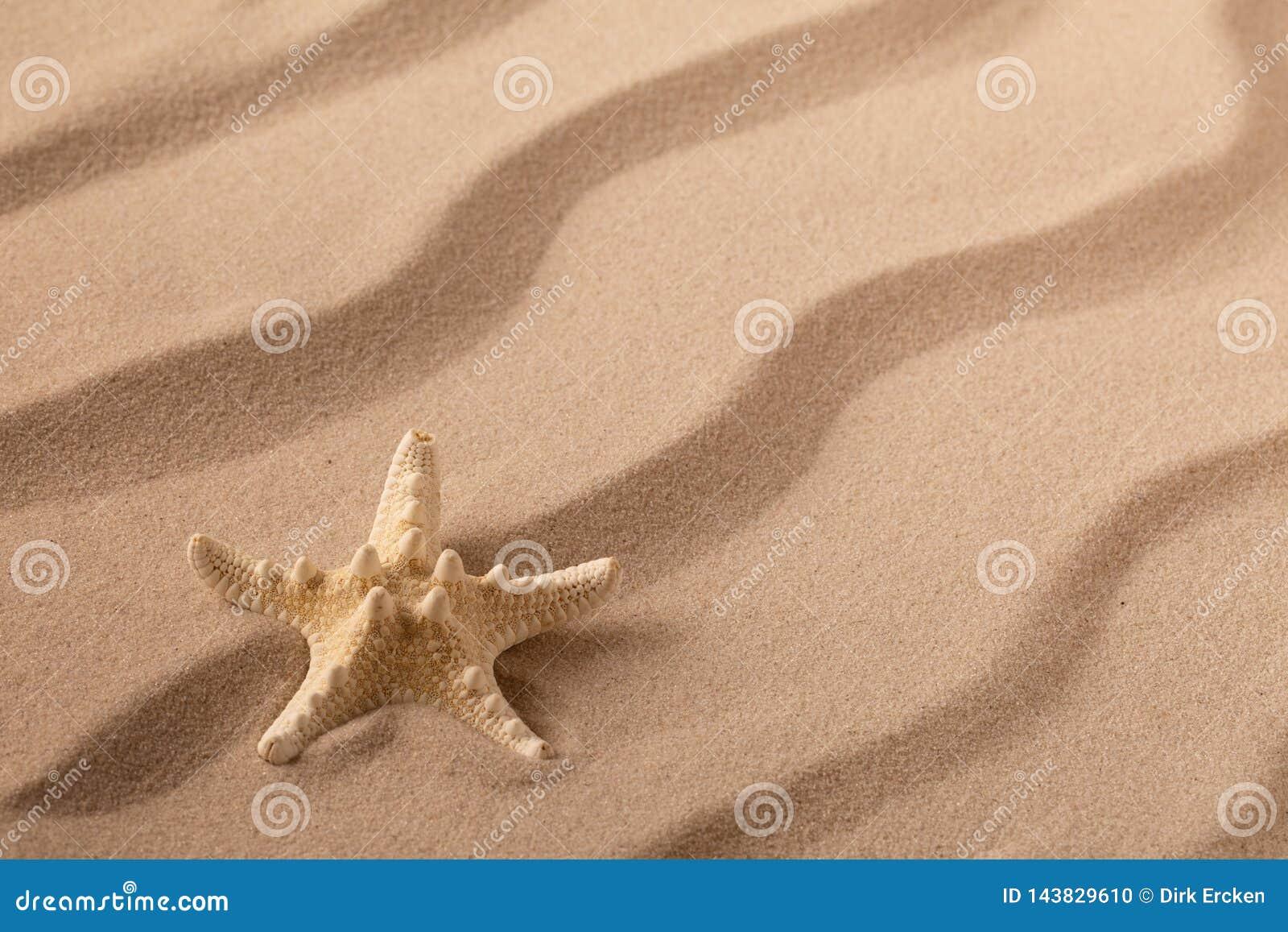 Seastar or starfish on rippled beach sand