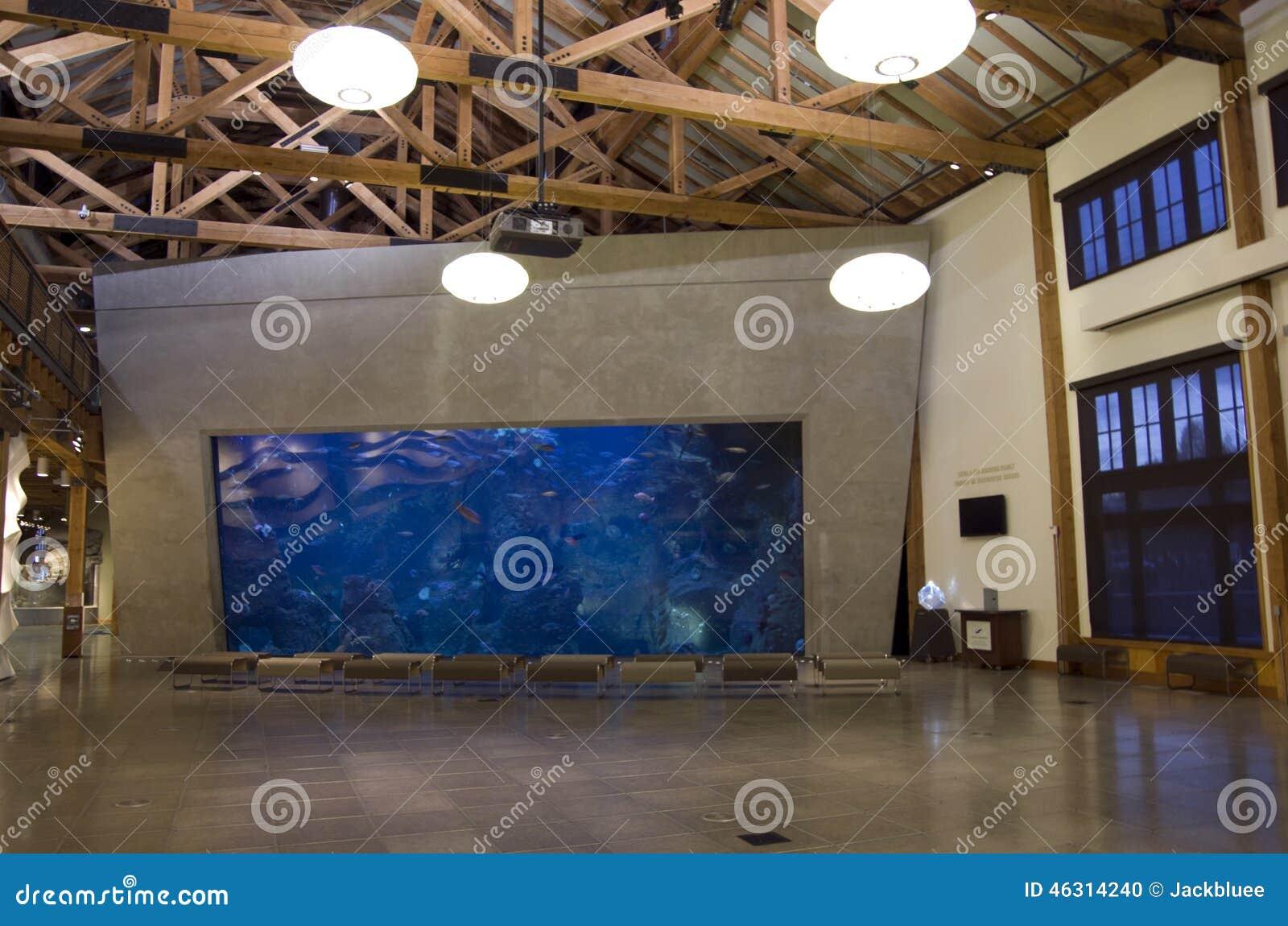 Seattle aquarium stock photo image of marine unique for Big fish seattle