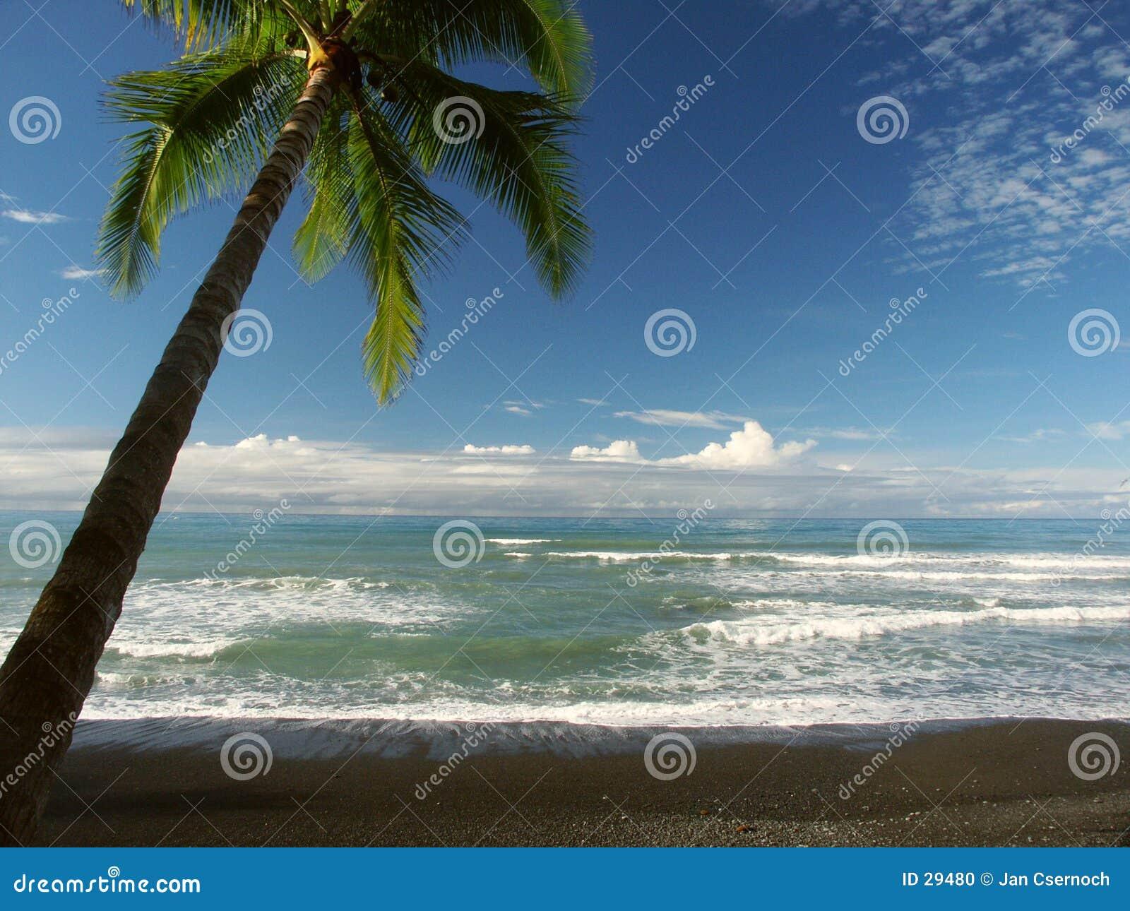 Download Seaview con palmtree foto de archivo. Imagen de horizonte - 29480
