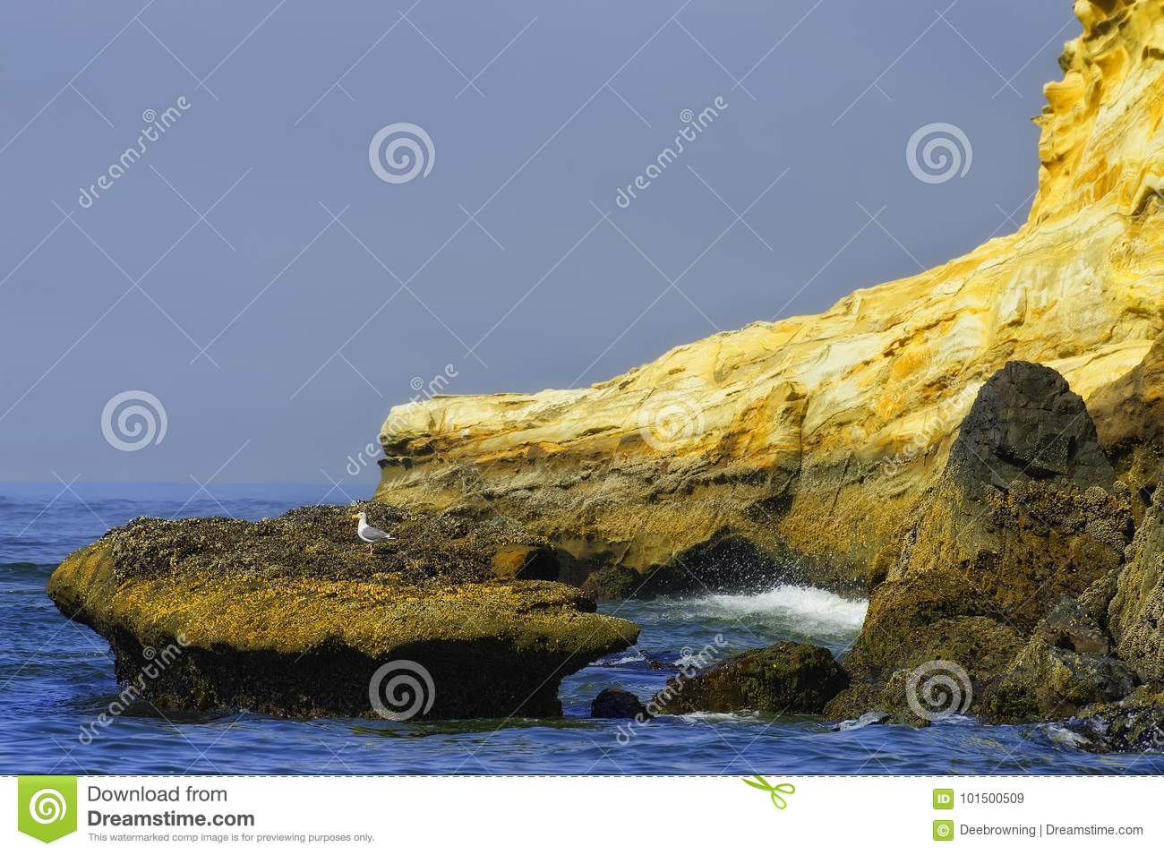 Lone Seagull perches on a rock surrounded by seawater