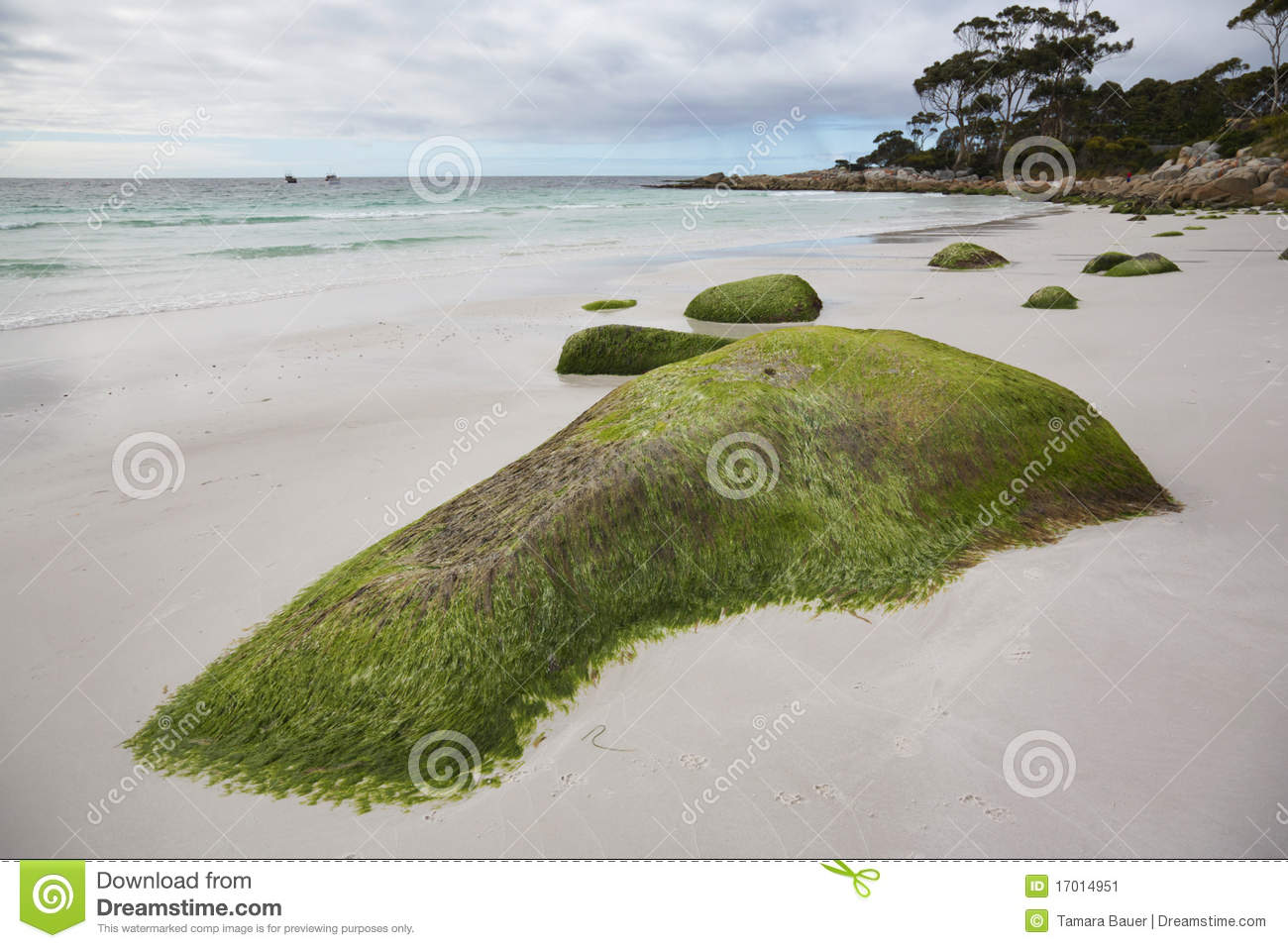Seaweed covered rocks tasmania stock image image 17014951 for Landscaping rocks tasmania