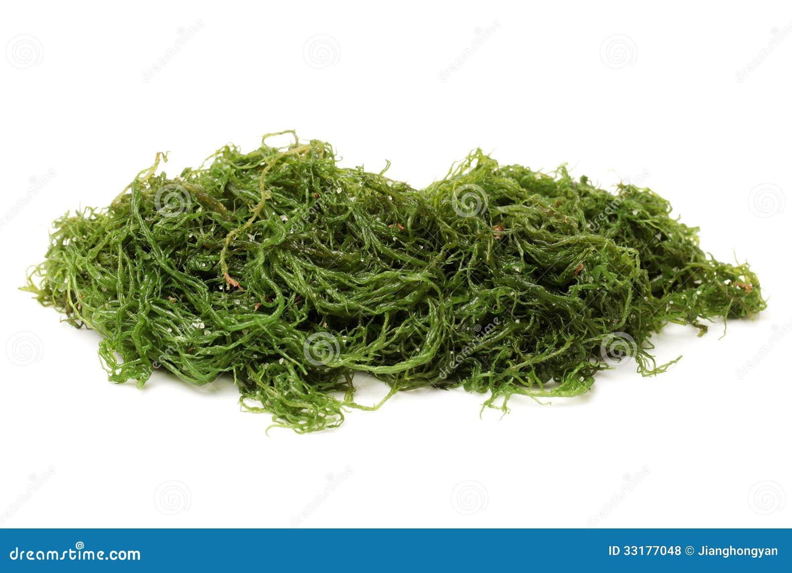 seaweed stock photo image of fresh  brown  food  nature seaweed illustration vector seaweed vector png