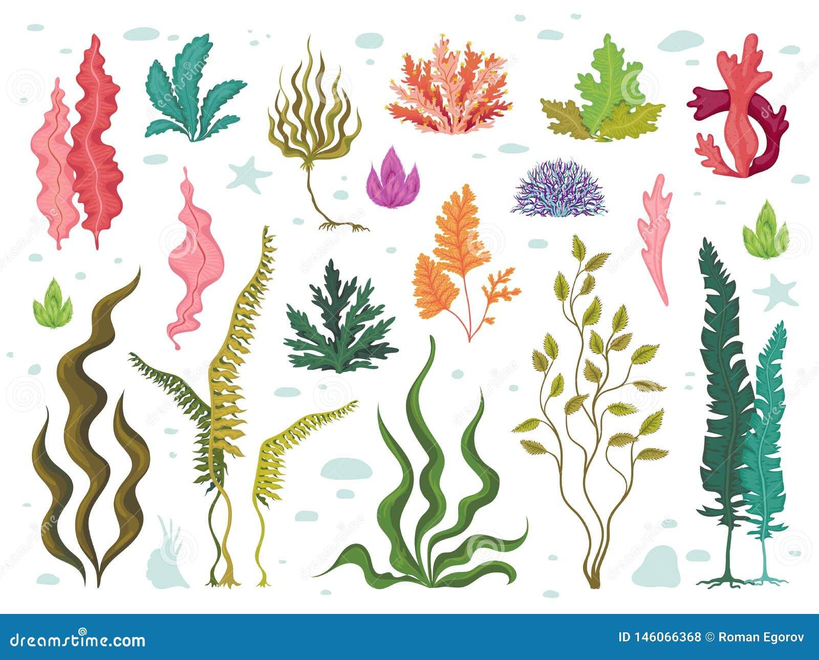 Ocean Coral Transparent Background
