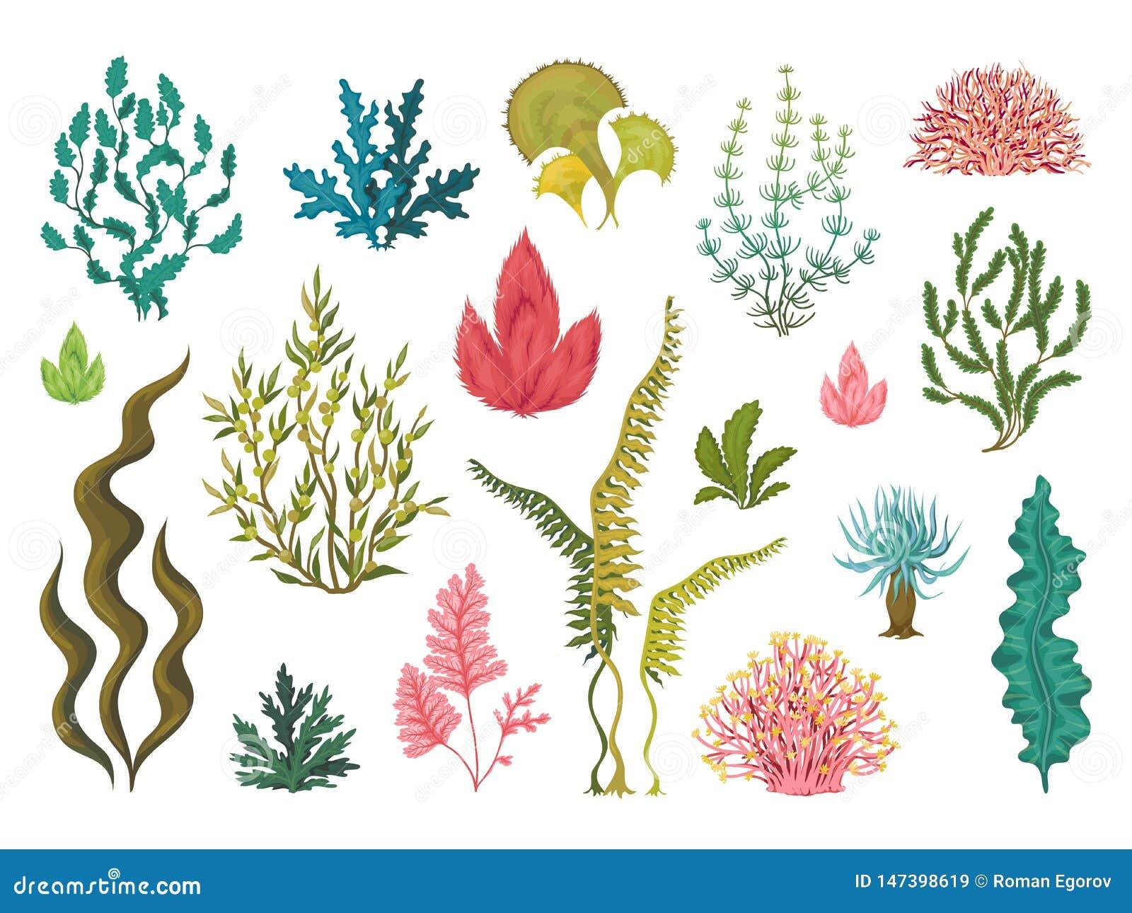 Seaweeds Underwater Ocean Plants Sea Coral Elements Hand Drawn Ocean Flourish Algae Cartoon Decorative Drawing Stock Vector Illustration Of Hand Elements 147398619