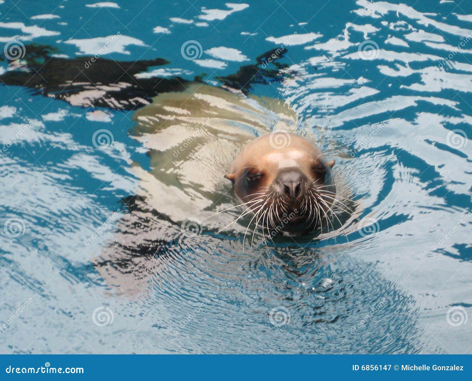 Seaworld морсого льва
