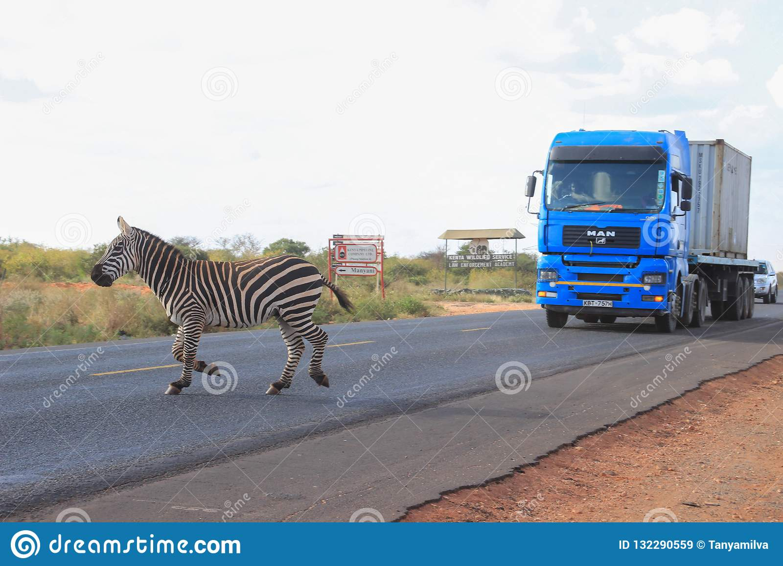 Sebror korsar vägen i den Tsavo nationalparken kenya
