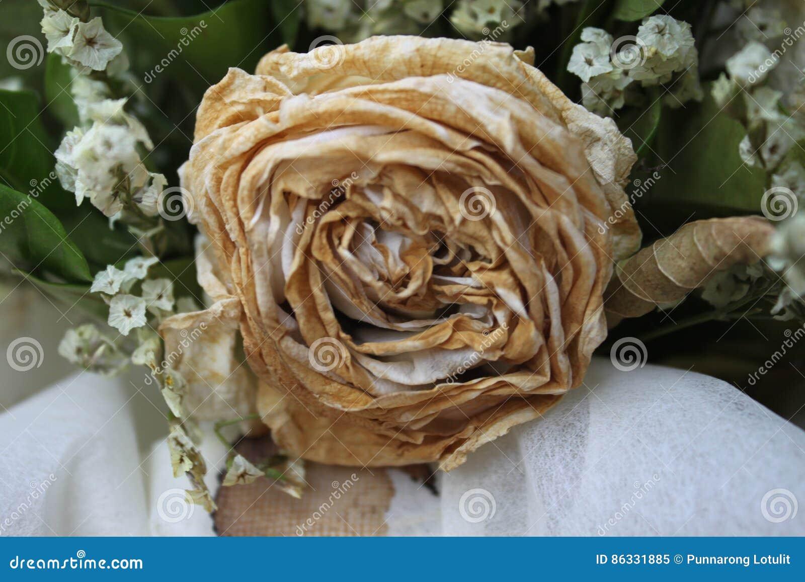 Sec Blanc S Est Leve Apres Le Saint Valentin Fane S Est Leve Image