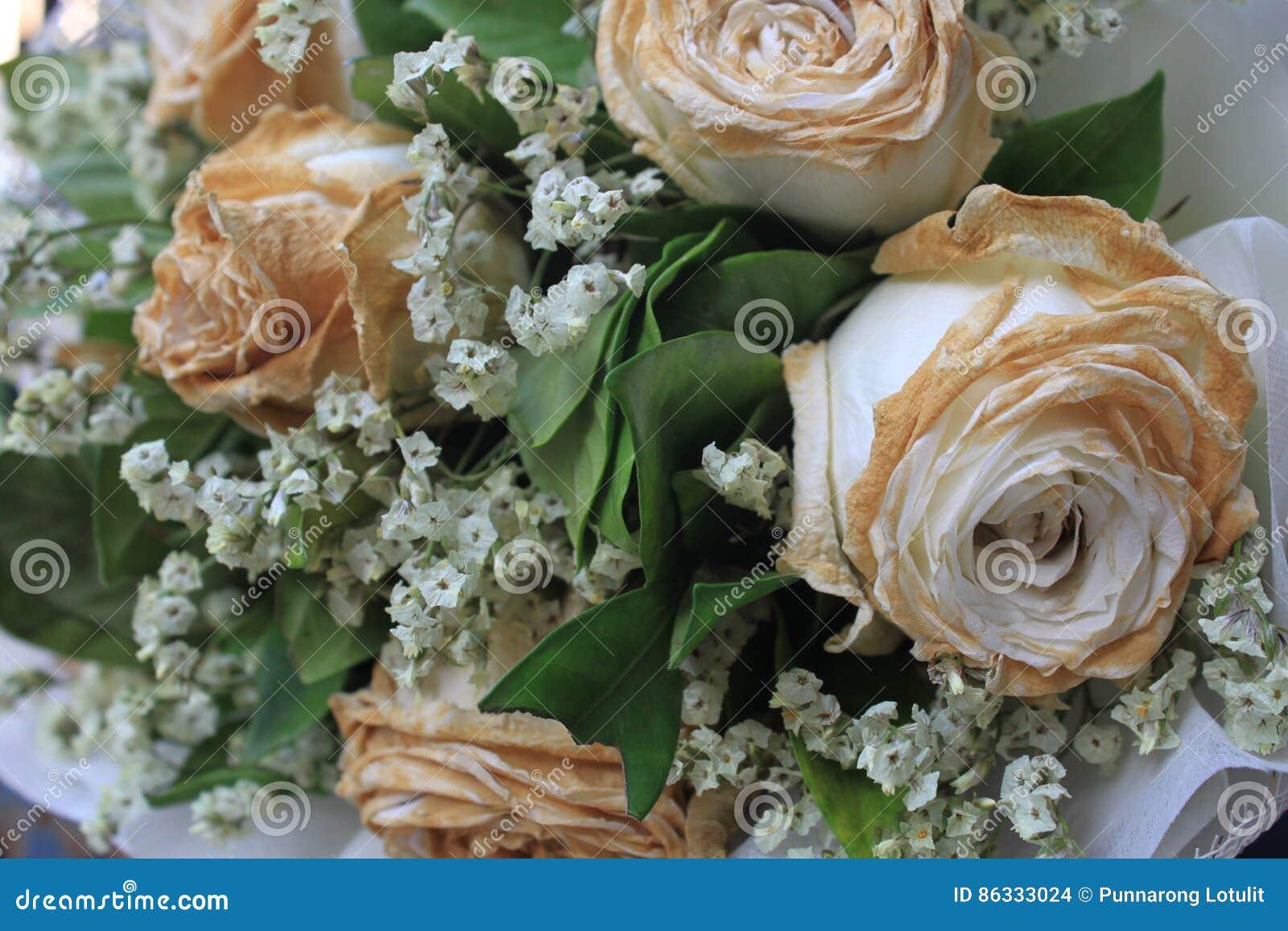 Sec Blanc S Est Leve Apres Le Saint Valentin Fane S Est Leve Photo