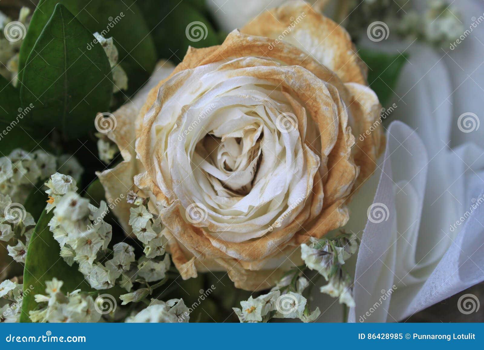 Sec Blanc S Est Leve Apres Le Saint Valentin Fane S Est Leve Amour