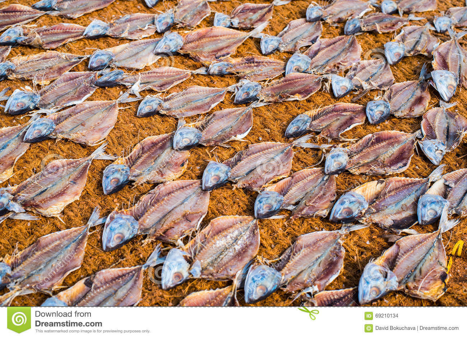 Secado de pescados salados en el bonote en Mangalore, la India