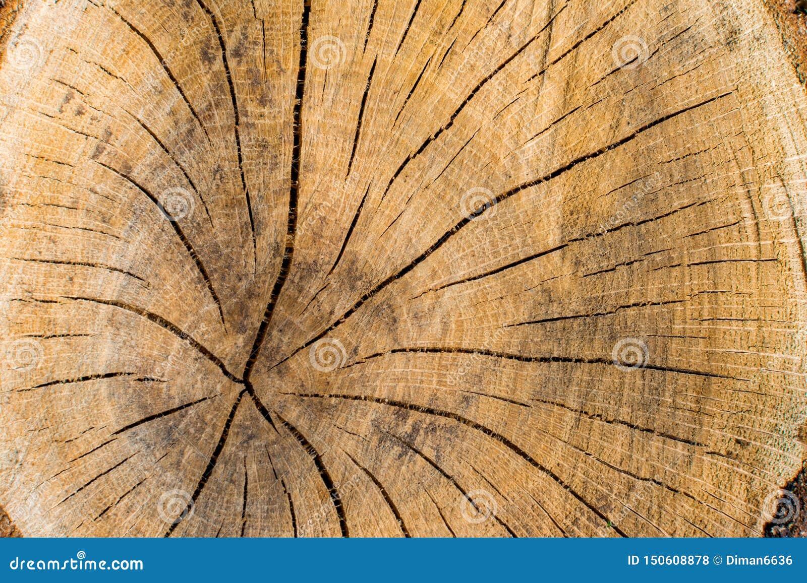 Sección del primer del árbol, textura de la concepto-cruz de la protección del medio ambiente