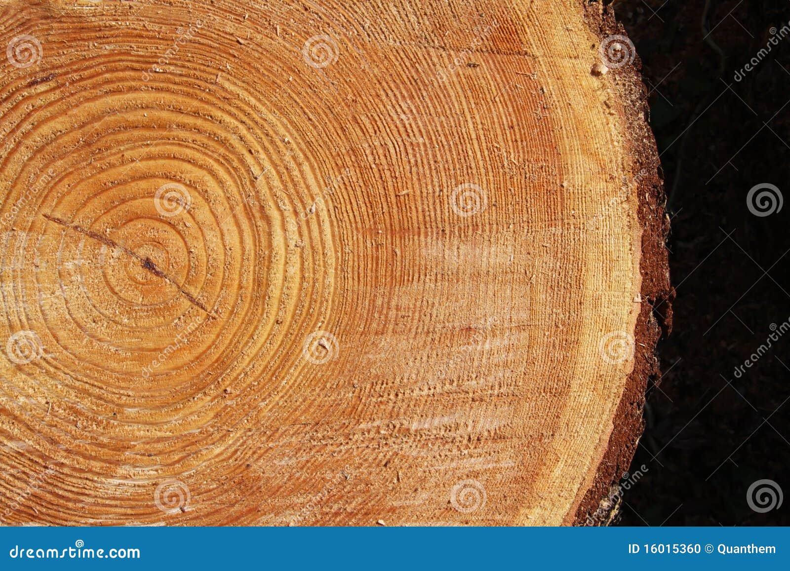 Sección representativa de un árbol