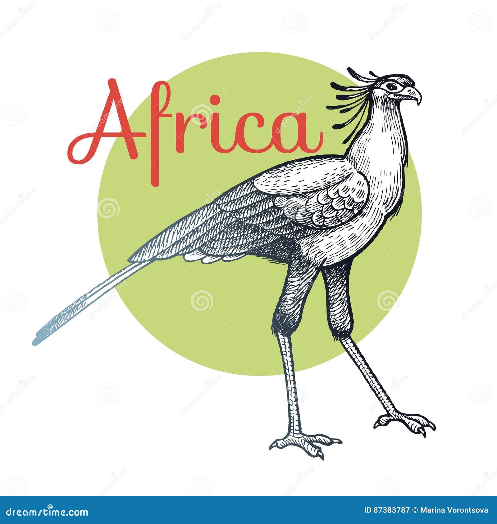 Secrétaire oiseau africain