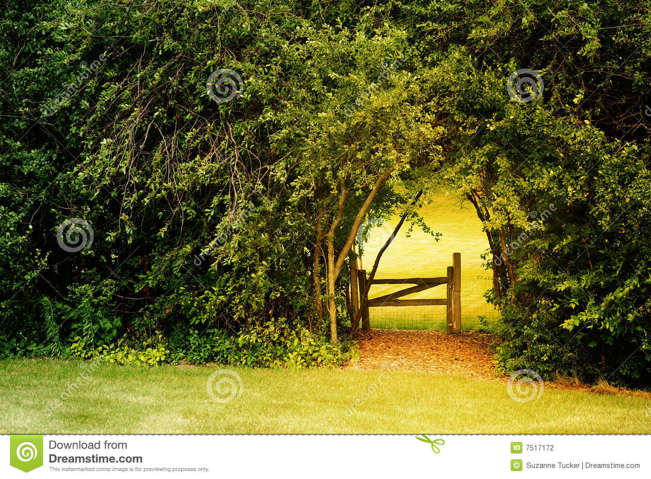 Backyard Forest Management : gate leads to a secret garden that is surrounded by overgrow trees