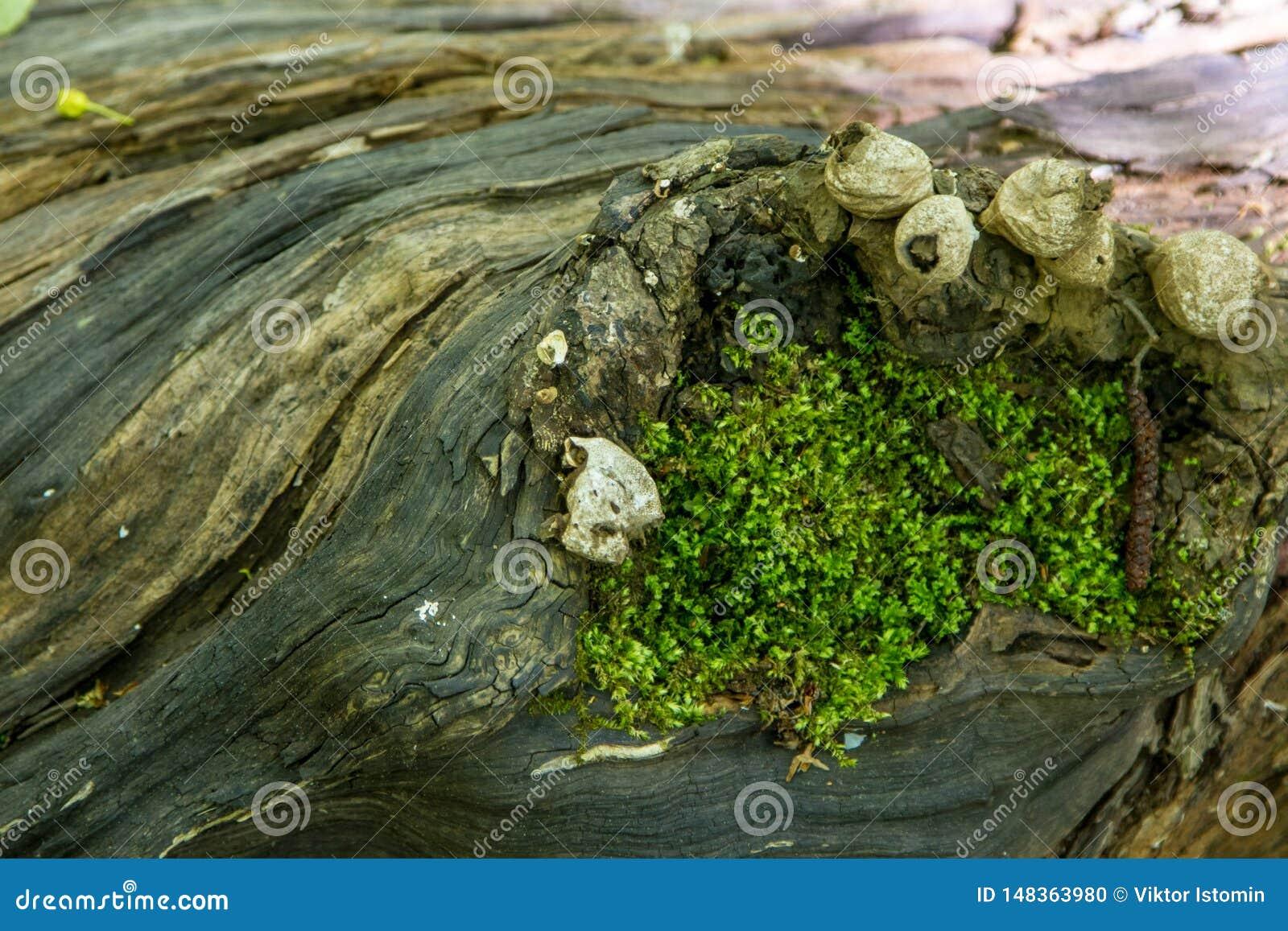 Secretos de un ?rbol viejo caido en el bosque