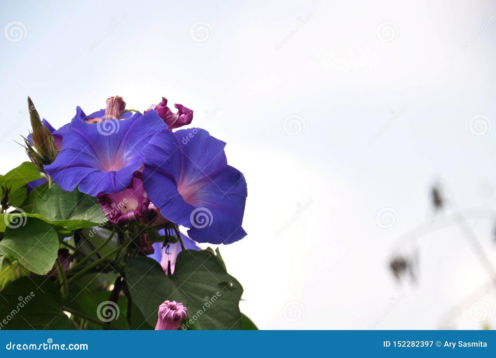 Secteurs Lumajang de colline des Wildflowers B29