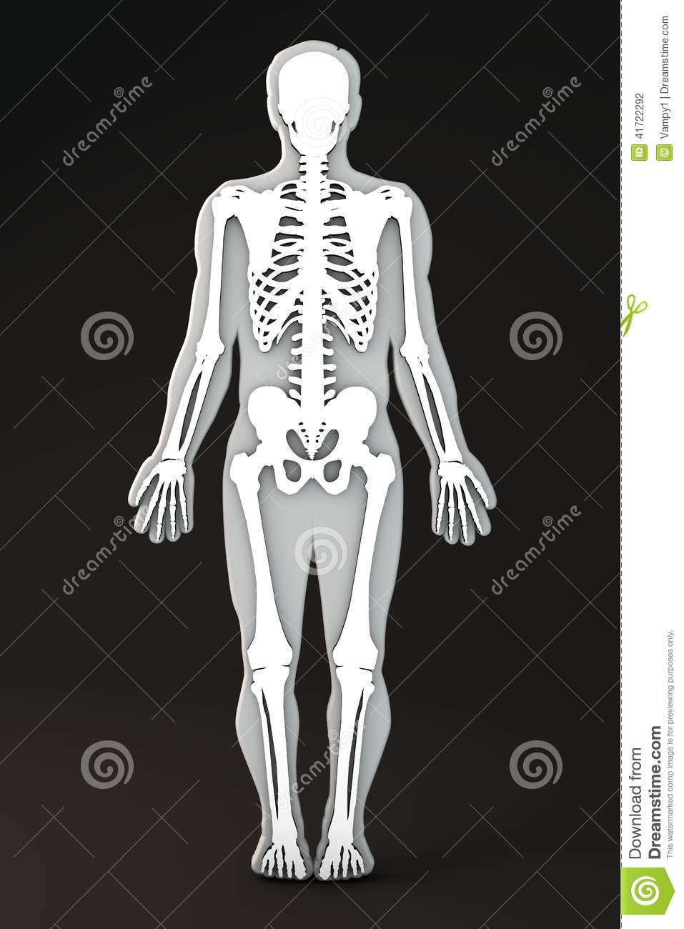 Section Of The Human Body Bones And Skeleton Stock Illustration
