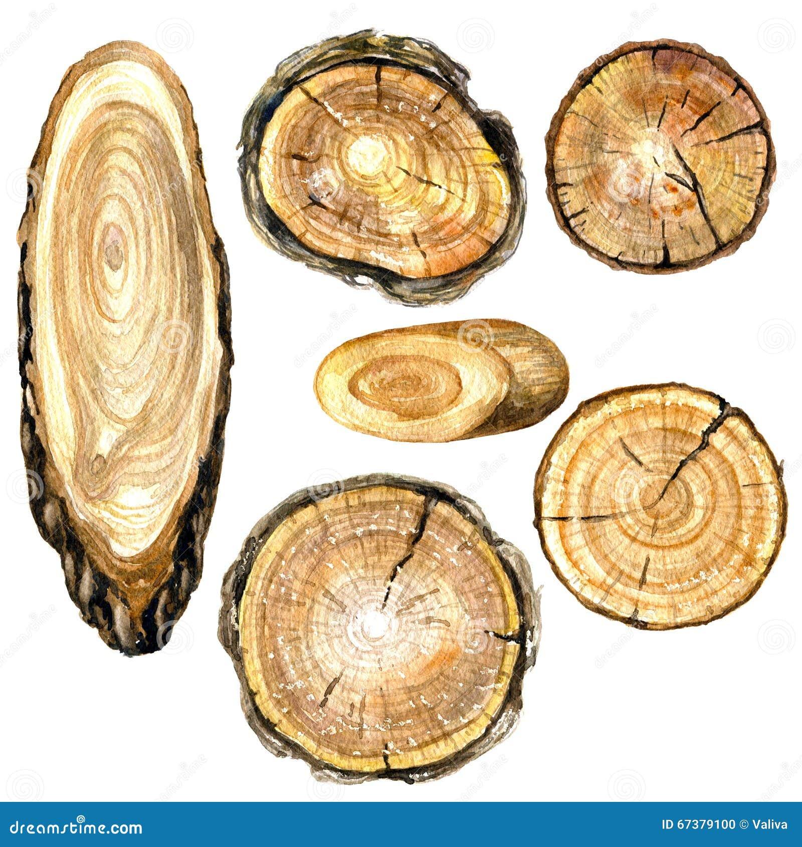Section transversale d aquarelle de tronc d arbre