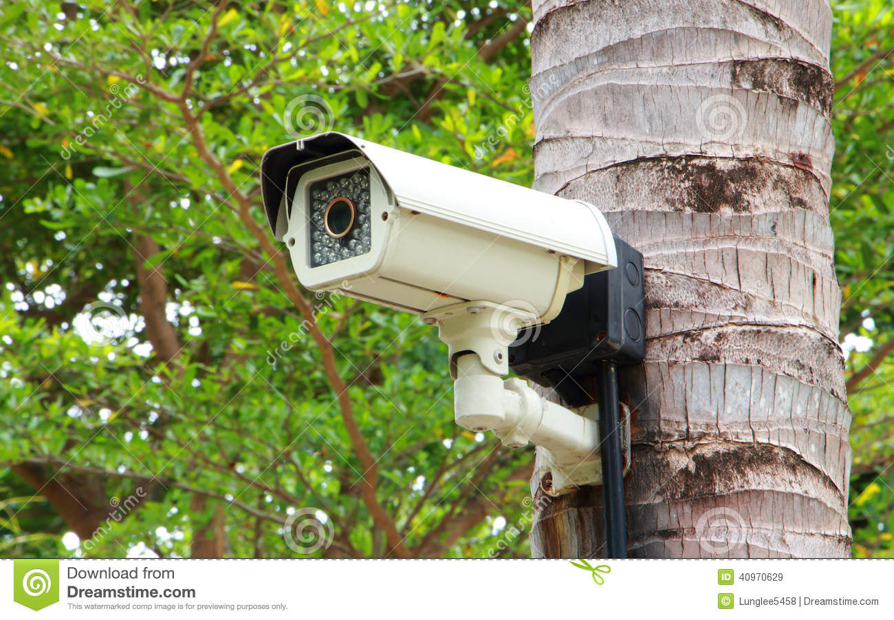 Tree Mounting Cctv Monitoring System : Security camera stock image of system electronic