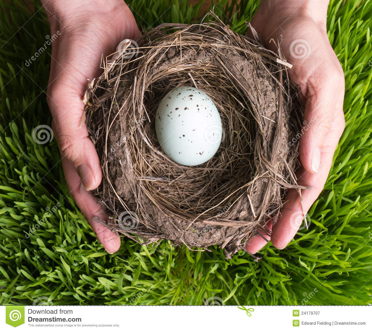 Hands Holding A Nest Royalty Free