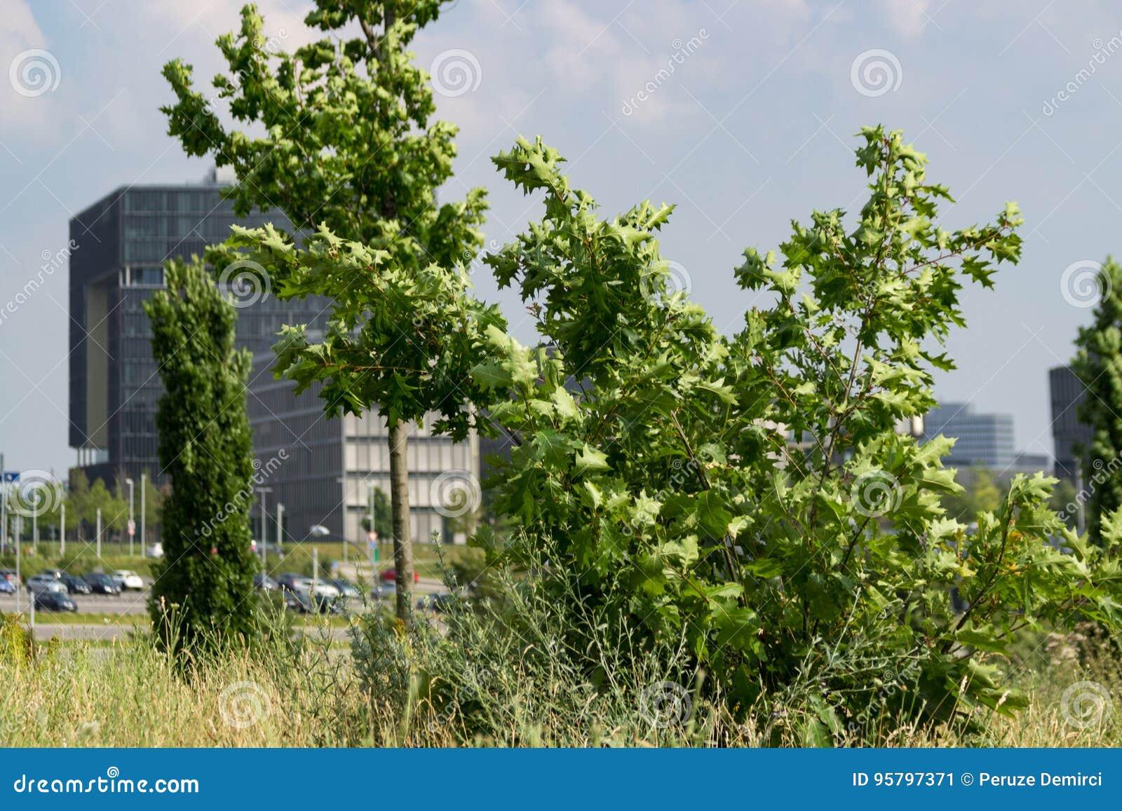 Sede de Krupp con los árboles delante de ella