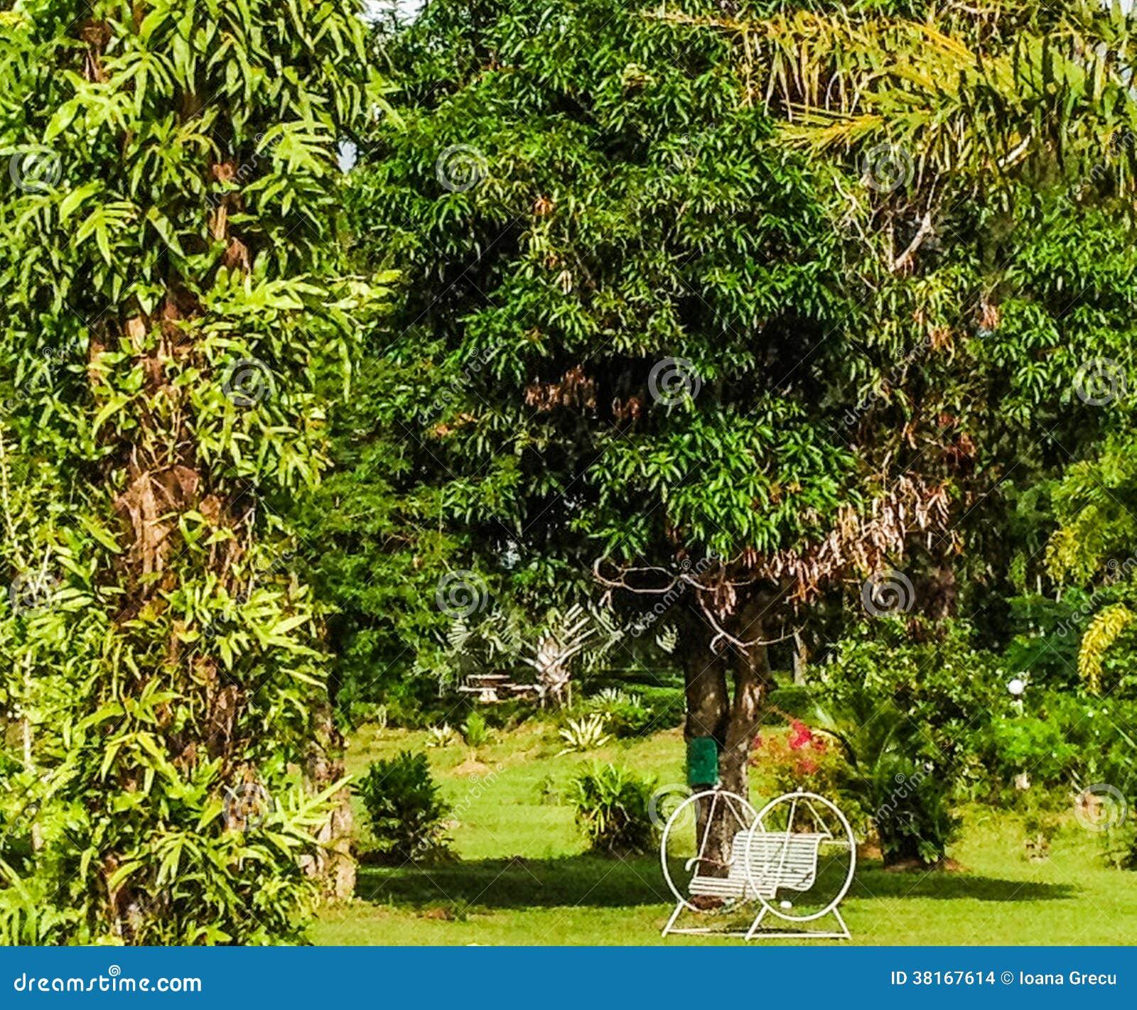 Sedia di oscillazione in giardino tropicale immagini stock - Giardino tropicale ...