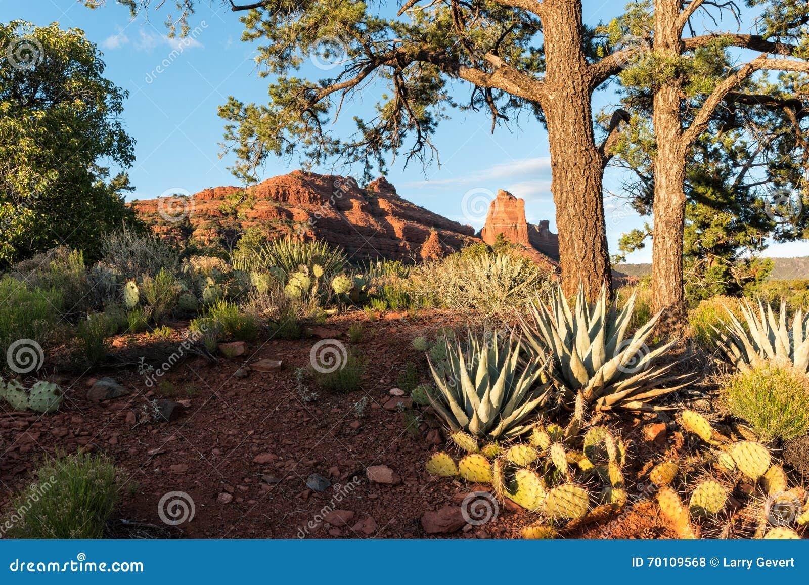 Sedona, Arizona evening landscape