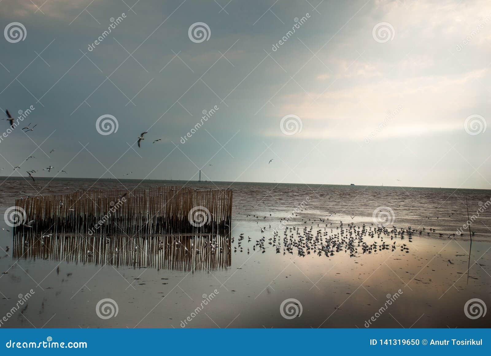 Seeseagulls†‹at†‹Bang†‹Pu