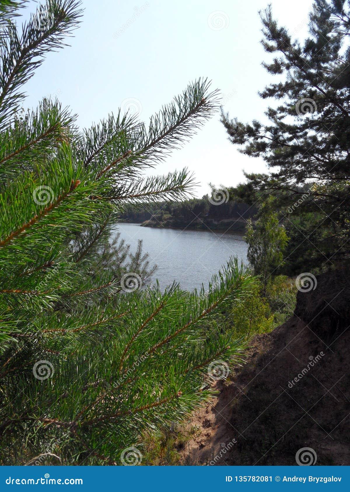 See an einem sonnigen Sommertag vertikale Ansicht hinter die Bäume