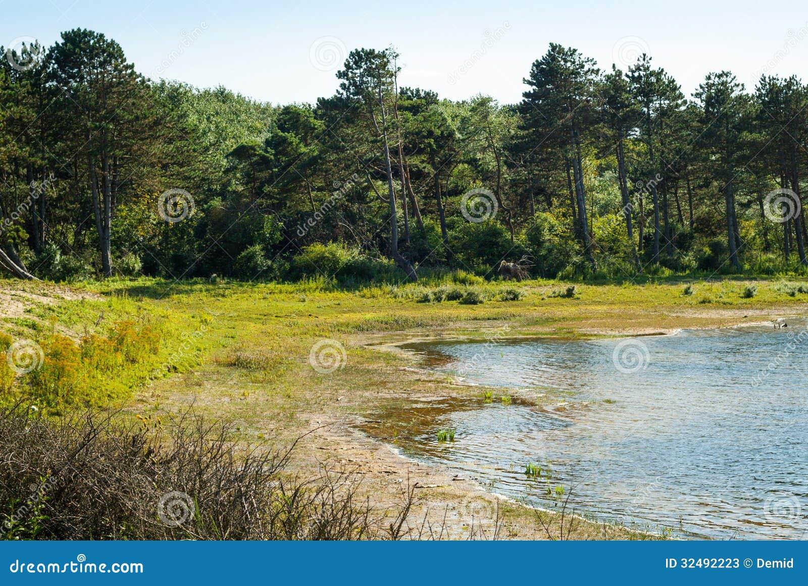 See und Wald in den Dünen