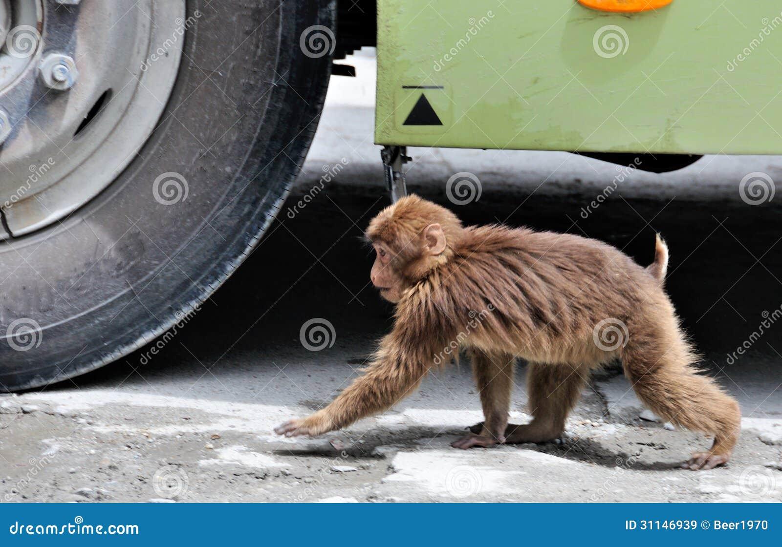 K Kutta Monkey Walk Download See Who Is Faster Roya...
