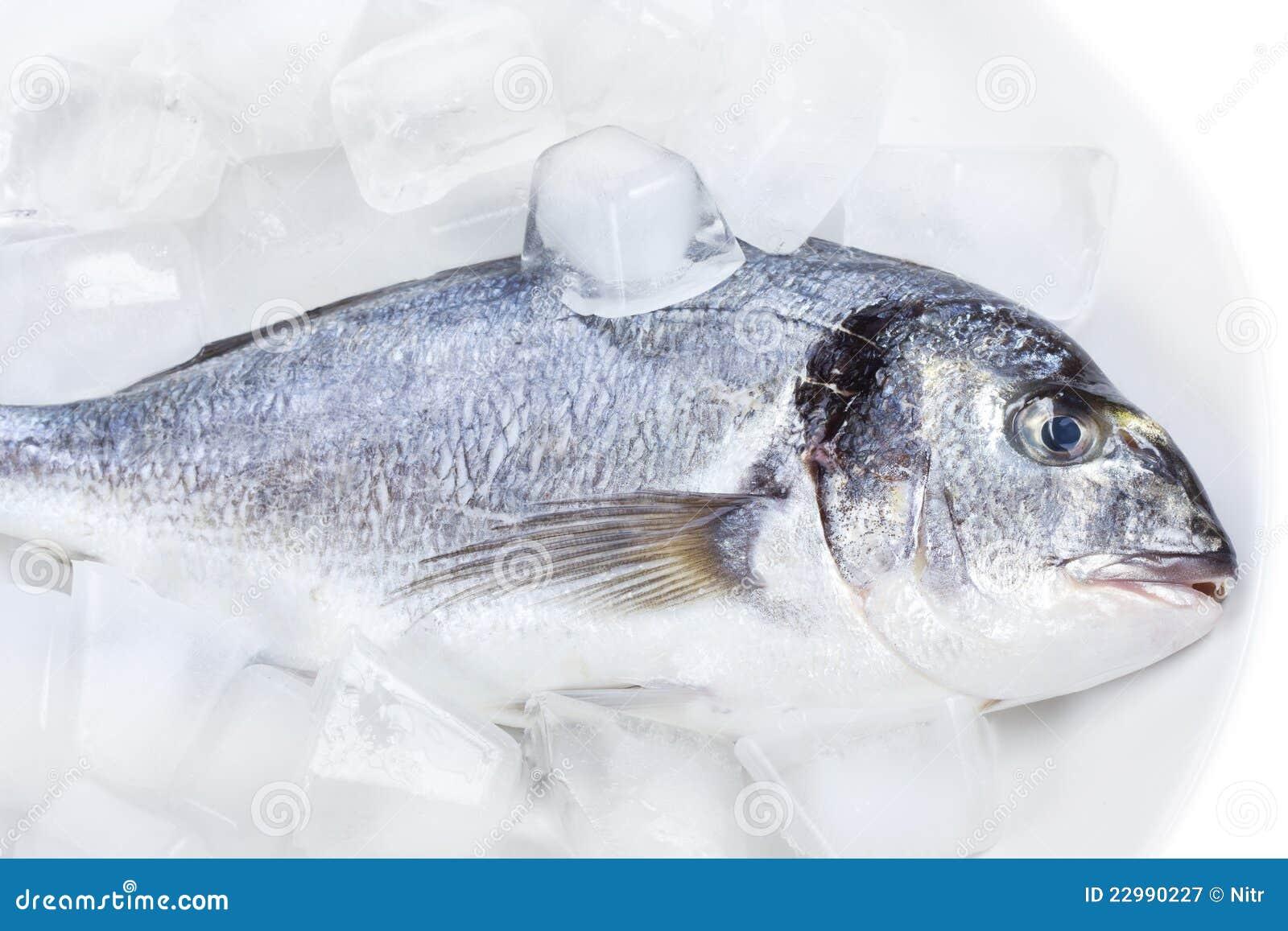Sind Stripper Fische auch Seebarsch