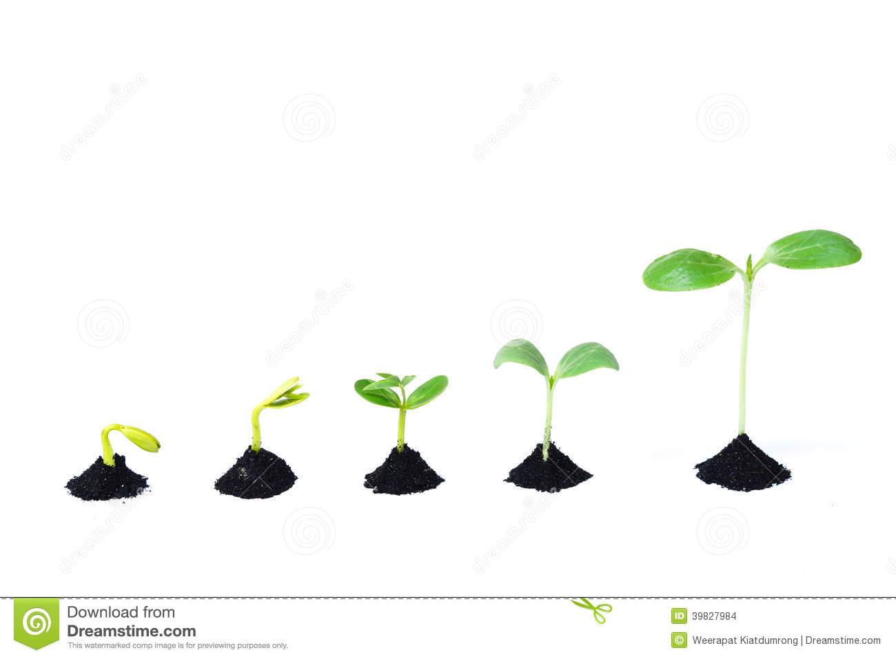 Stock Images Seed Germination Sequence Soil Evolution Concept Image39827984 on Plant Life Cycle Stages
