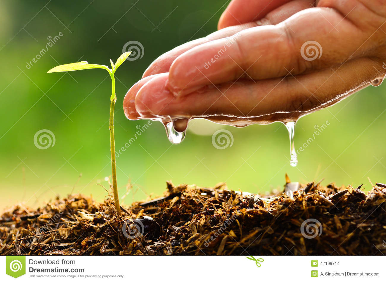 Seeding, Seedling, Male hand watering young tree