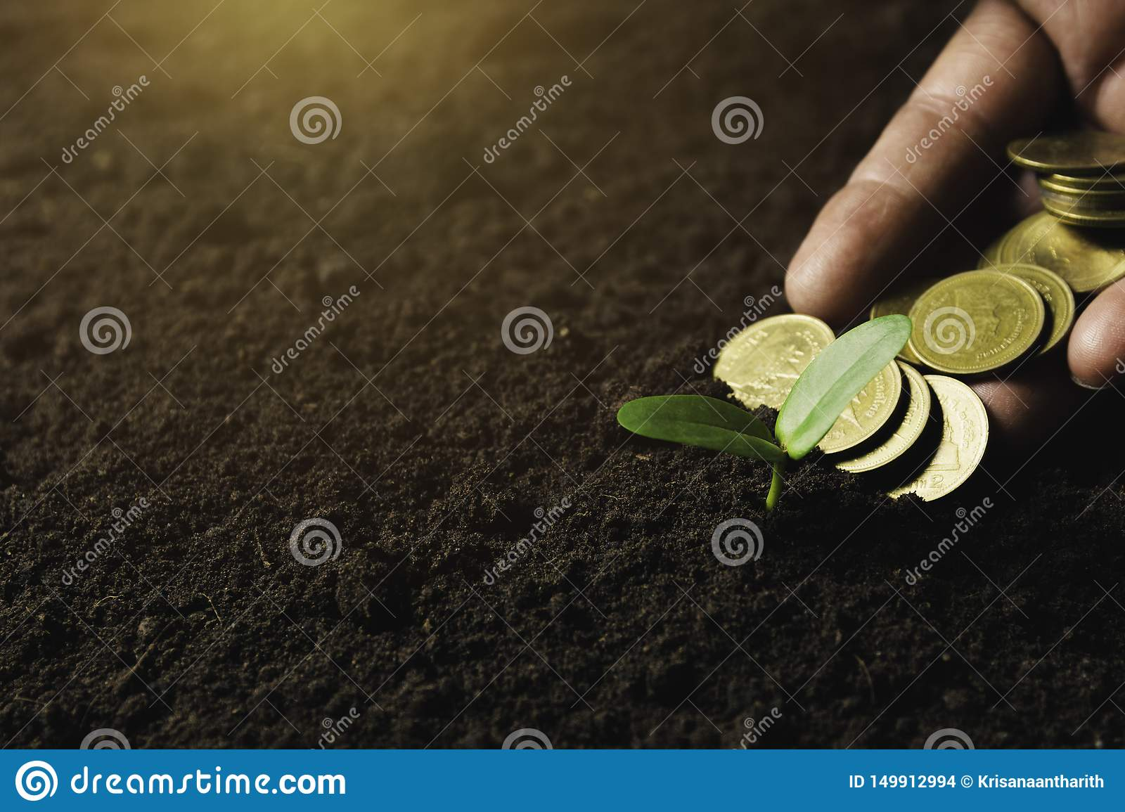 Seedling concept by human hand holding money coins with young tree on nature background