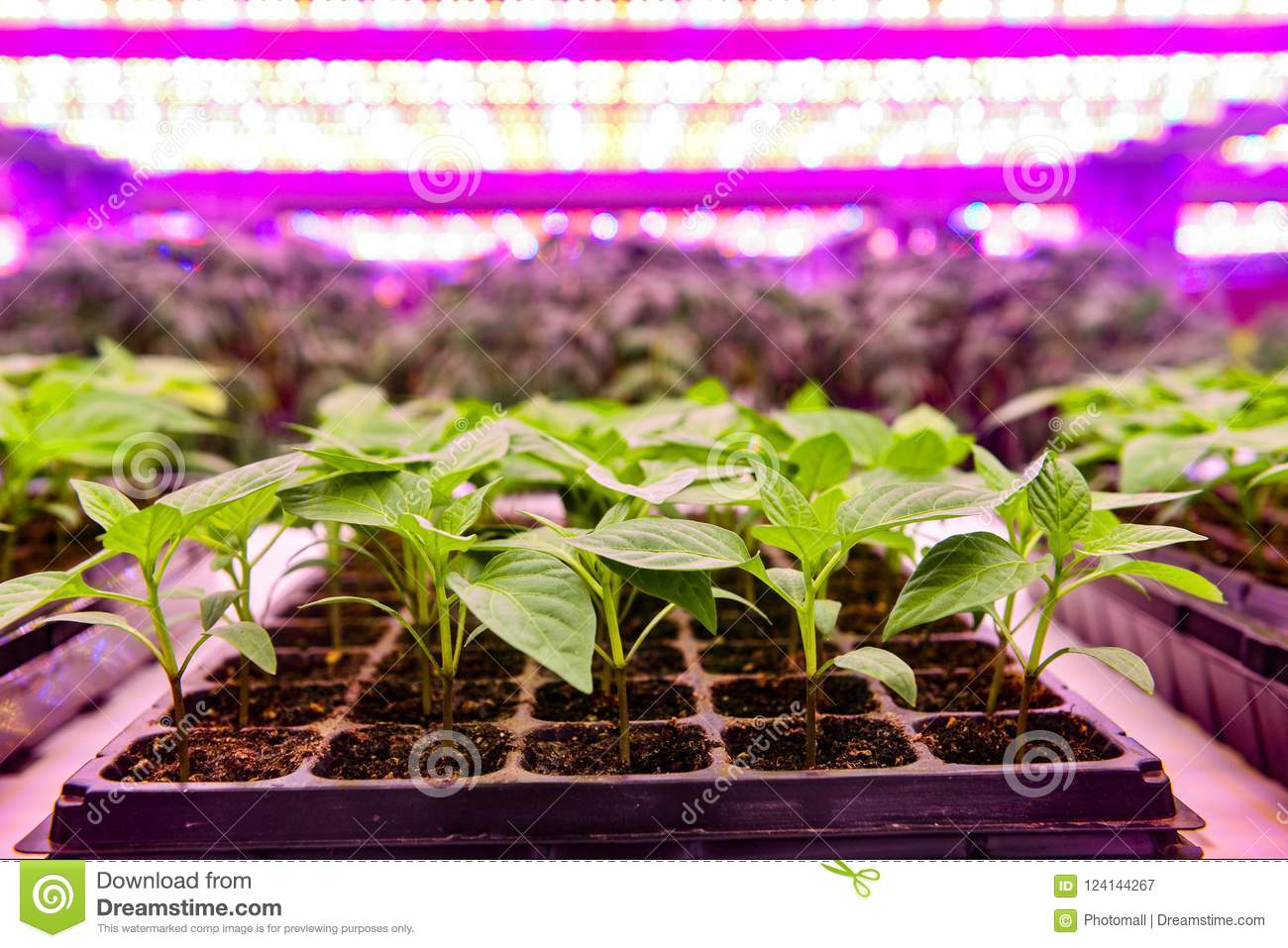 Seedling Grow With Led Plant Light In Farm Greenhouse Stock