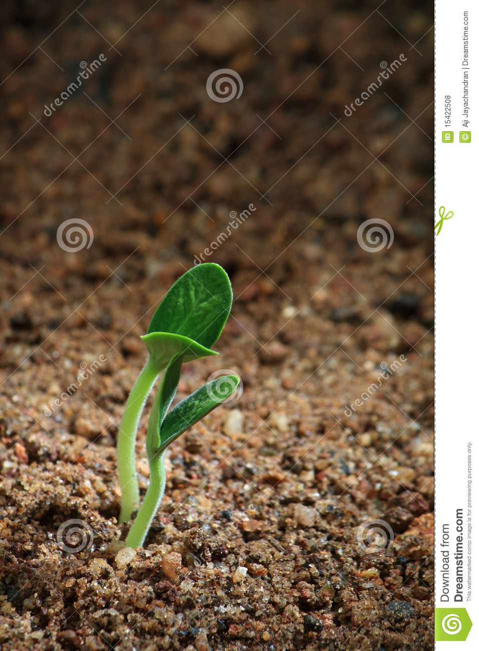 A seedling on soil