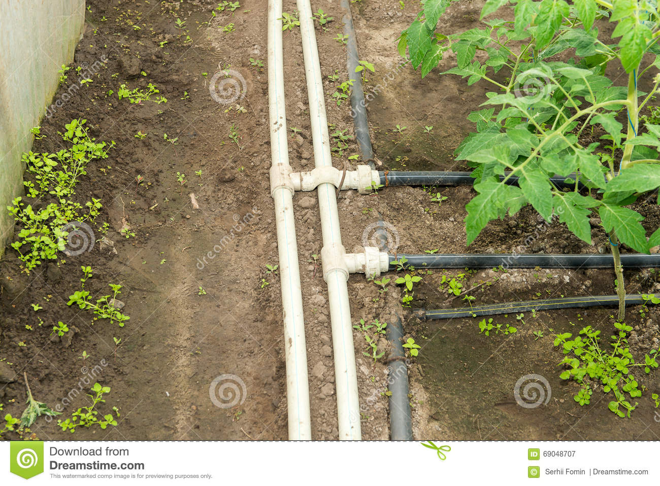 royaltyfree stock photo download seedling vegetable beds with drip irrigation system