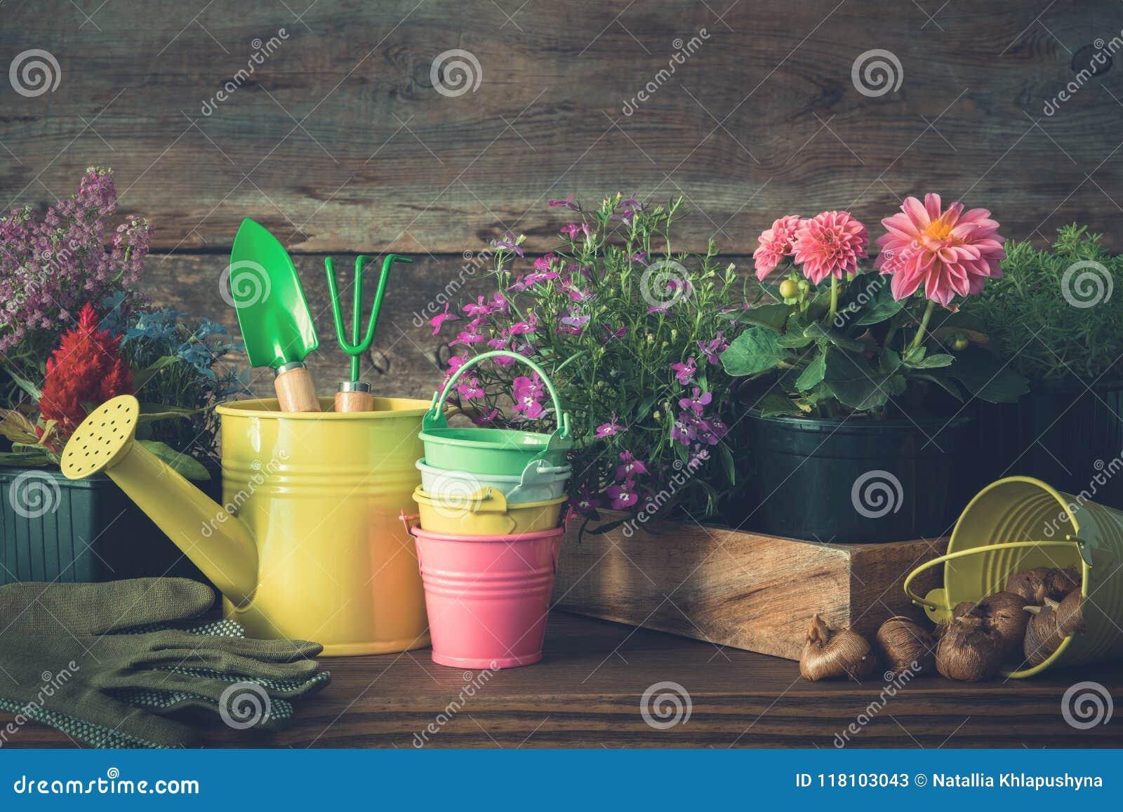 Seedlings of garden plants and flowers in flowerpots. Watering can, buckets, shovel, rake, gloves.