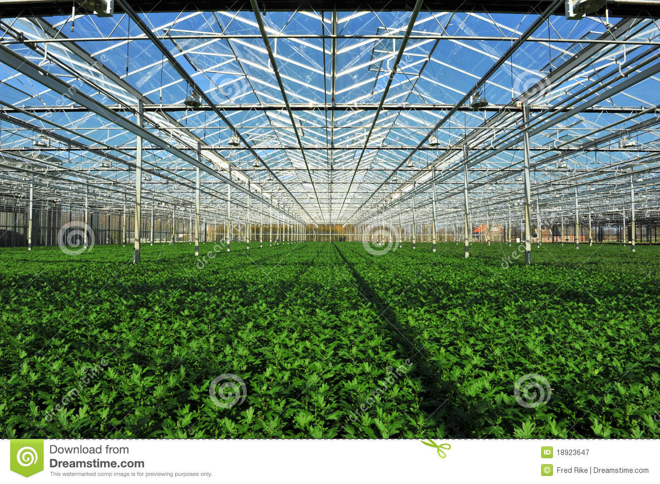 seedlings in greenhouse royalty free stock photography