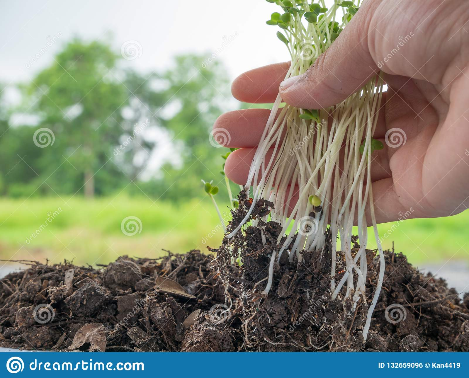 seedlings growing in soil with a complete mineral stock photo