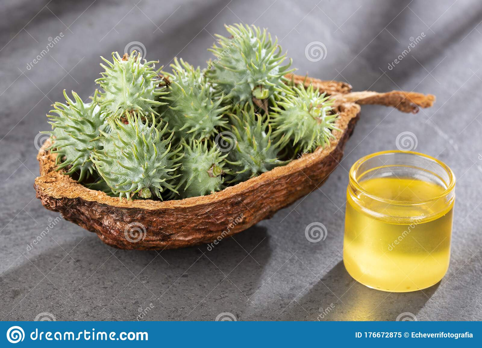 Seeds And Castor Oil Ricinus Communis Stock Image Image Of Cultivate Agriculture 176672875