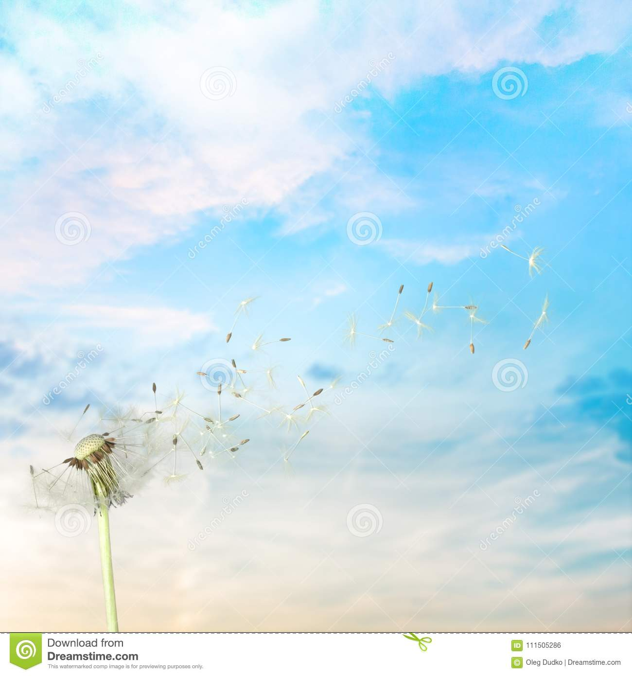 Dandelion With Blowing Seeds On Sky Background Stock Photo