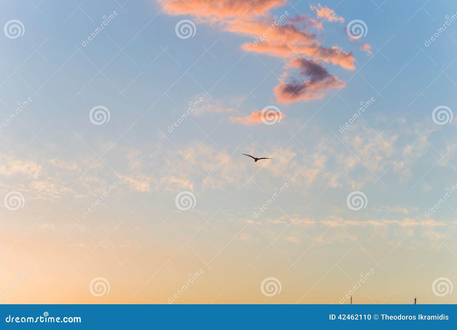 Seemöwe in der Luft