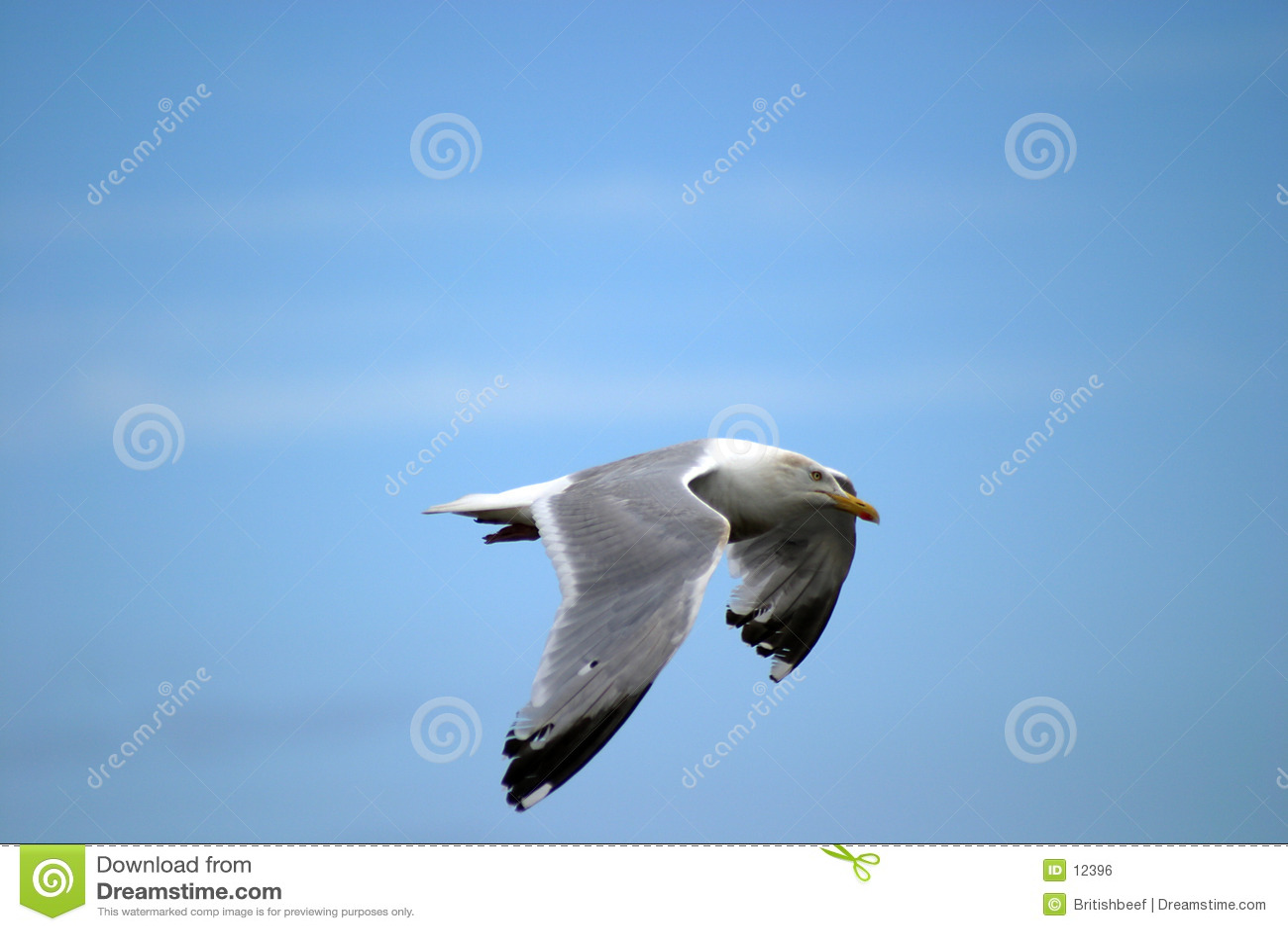 Seemöwe im Flug