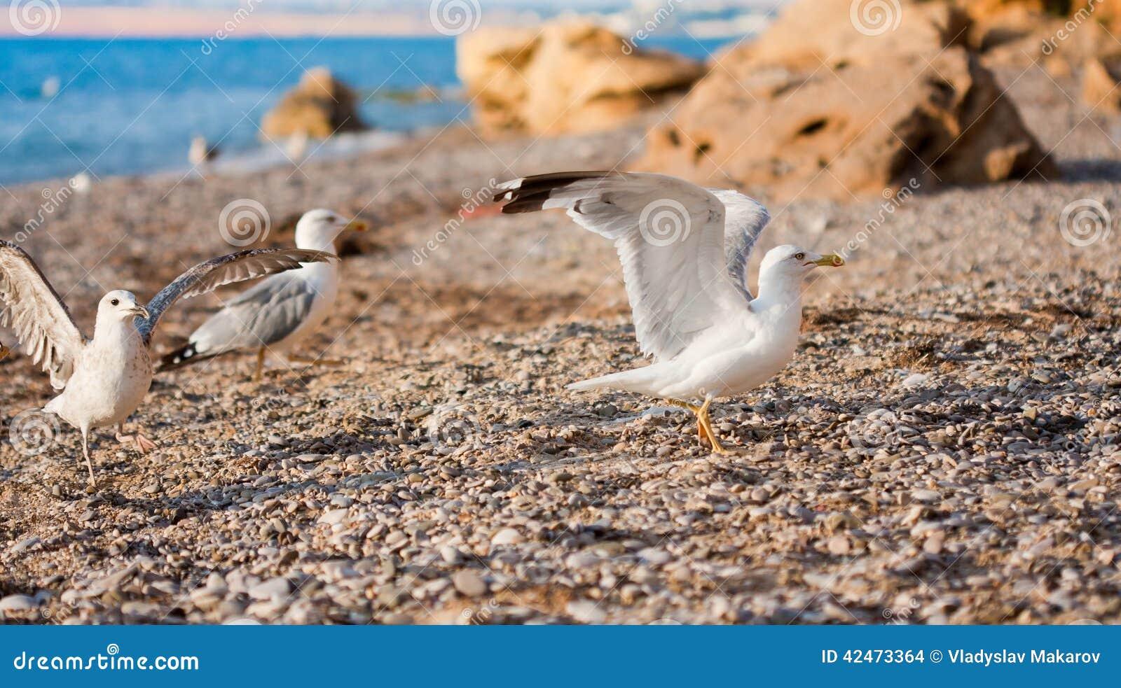 Seemöwen auf dem Strand