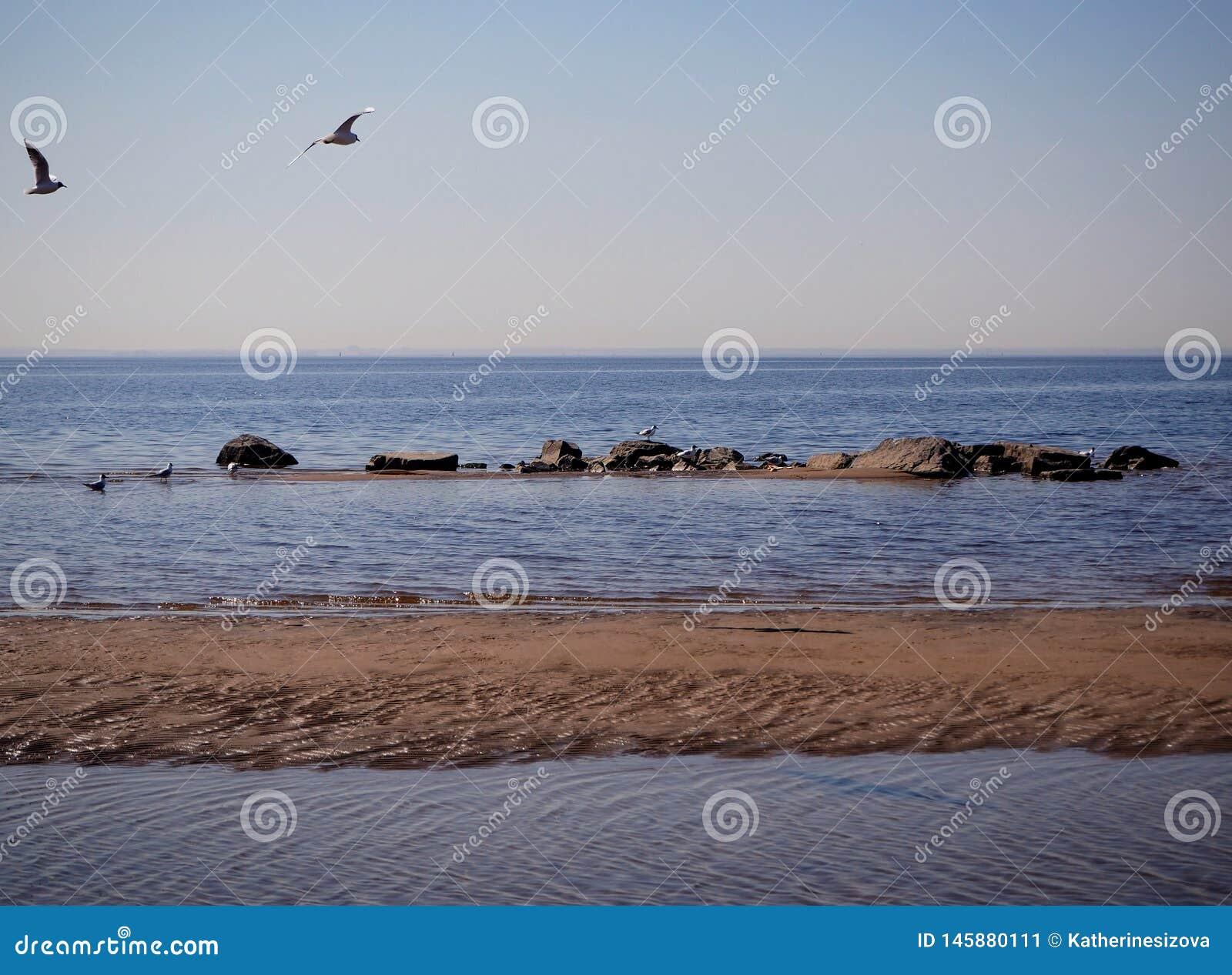 Seemöwen fliegen über das Meerwasser