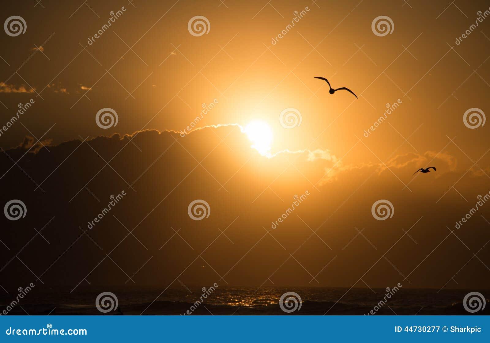 Seemöwen-Sonnenaufgang über Ozean