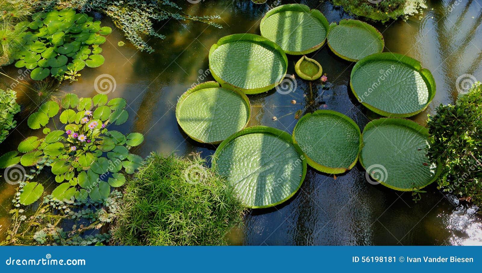 Seerose-botanischer Garten, Padua, Italien Stockbild