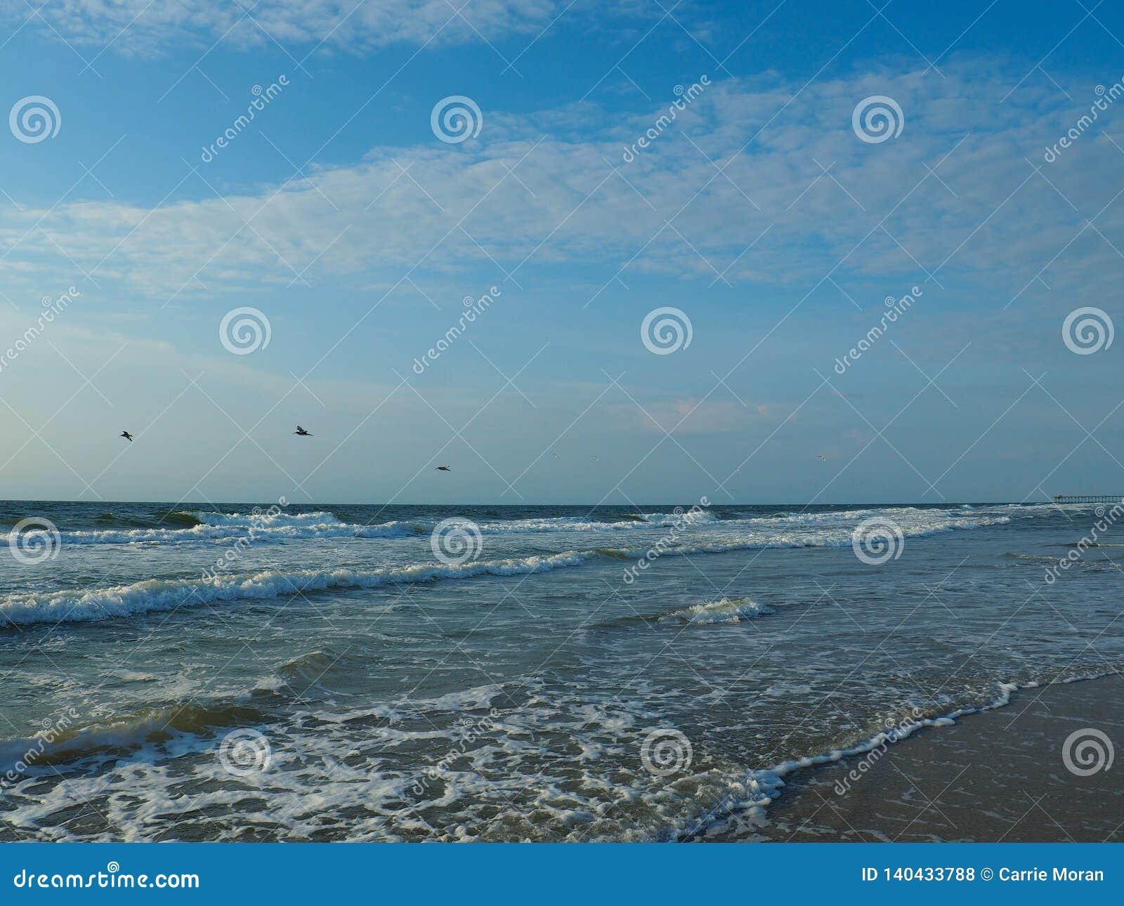 Seeschwalben, die über die atlantische Küstenlinie bei Carolina Beach fliegen